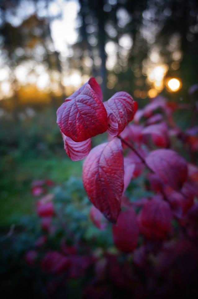 Höstens färger inspirerade Lyrorna under Körhelgen i Övik